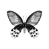 Hand drawn butterfly - 254891558