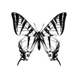 Hand drawn western tiger swallowtail butterfly - 254891797