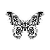 Hand drawn black and white butterfly - 254891943
