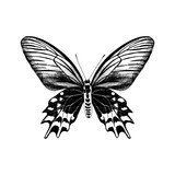 Hand drawn Antropaneura Semperi butterfly - 254891993