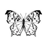 Hand drawn salamis parchassus - Mother-of-Pearl - butterfly - 254892129