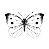 Hand drawn small white butterfly - 254892188