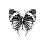 Orange oakleaf or dead leaf - Kallima inachus - butterfly - 254892383