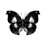 Hand drawn butterfly on white background - 254892526
