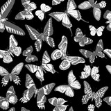Monochrome seamless pattern with hand drawn butterflies - 254892758