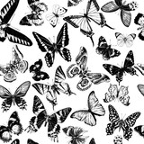 Monochrome seamless pattern with hand drawn butterflies - 254892938