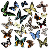 Hand drawn butterflies collection - 254893573