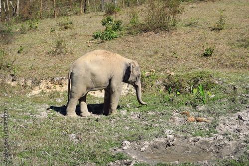 Éléphant en promenade