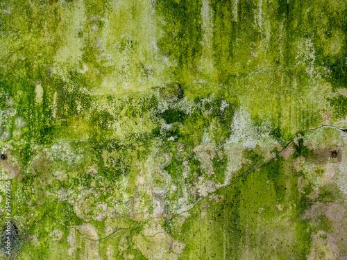 verwitterte alte grüne Wand mit Moos © Animaflora PicsStock