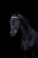 Beautiful horse on a black background