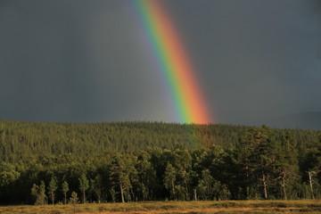 Rainbow in Sweden