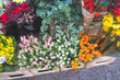 colorful flowers in the Dublin market - 254966133