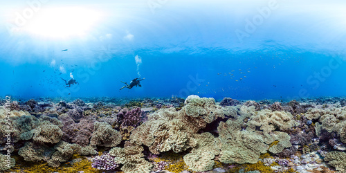 360 of divers over healthy coral