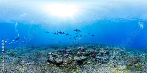360 of Trevally over reef