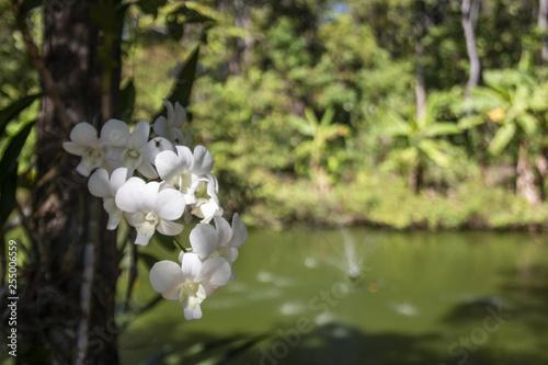 Garuga Pinatta by a lake