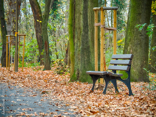 Autumn in the park © petroos