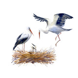Storks and newborn chick in the nest. Watercolor hand drawn illustration.