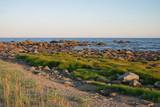 Serene summer evening on seashore
