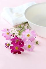 コスモスの花とタオルと洗面器