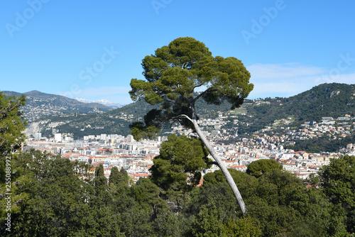 Beautiful tree over Nice, France Landscape photo