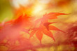 Sunny autumn season blurry leaves
