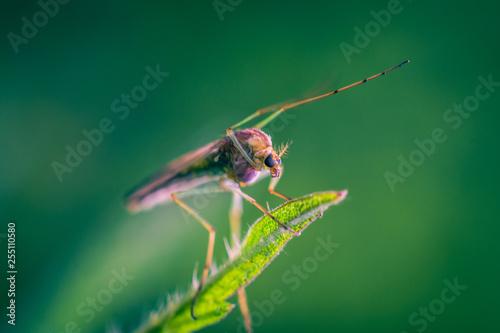 Mosquito - 255110580