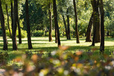 selective focus of trees with green leaves in peaceful park - 255147110