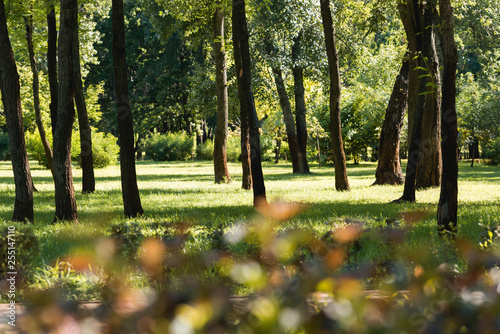 selective focus of trees with green leaves in peaceful park