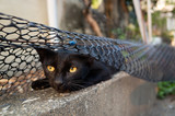 stray black cat hide and play