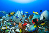 Coral reef with tropical reef fish