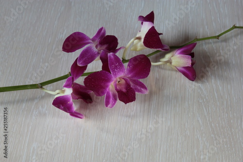 Purple orchids on wooden background. - 255187356