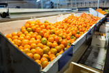 Production facilities for mandarins on agricultural farm
