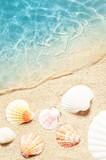 Seashell on the summer beach in sea water. Summer background. Summer time.