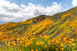 Scenic wildflower superbloom