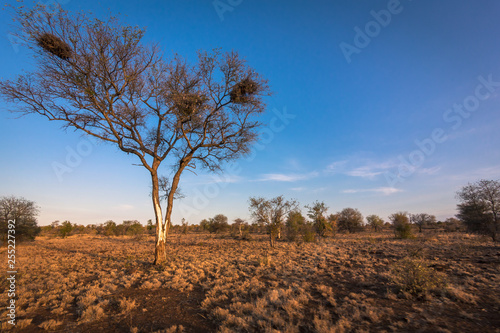 Single Tree, The Bush, South Africa