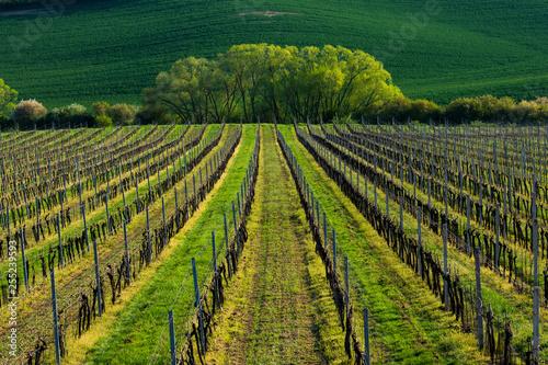Moravian Tuscany in spring