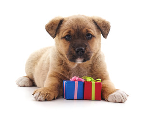 Dog with a gifts.