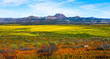 Super bloom desert wildflowers landscape panorama