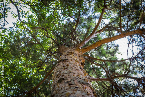 View from below of the trunk and branches of a tree