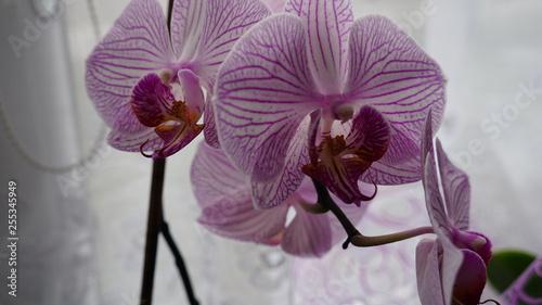 natura kwiat  - 255345949
