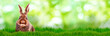 Leinwandbild Motiv green background banner bunny