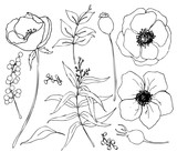 Vector collection of hand drawn plants with eucalyptus and anemone. Botanical set of sketch flowers and branches with eucalyptus leaves isolated on white background for design, print or fabric. - 255383593
