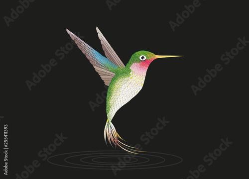 fliegender Kolibri auf schwarzen Grund