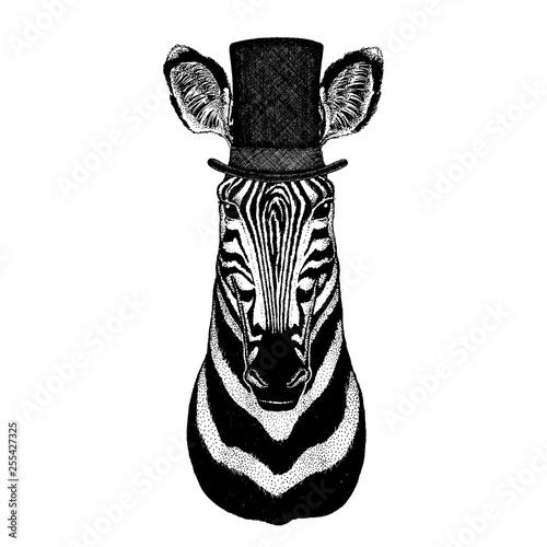 Wild animal wearing top hat, cylinder. Hipster zebra - 255427325