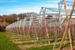 canvas print picture - Reihen mit Obstbäumen und Schutznetz im Winter/Frühjahr