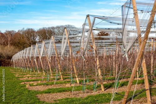 canvas print picture Reihen mit Obstbäumen und Schutznetz im Winter/Frühjahr