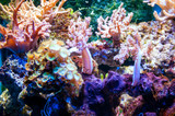 Coral reefs in a large aquarium