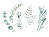 Watercolor greenery set. Hand drawn winter illustration with eucalyptus branch, leaves and fern. Vintage botanical plant - 255503535