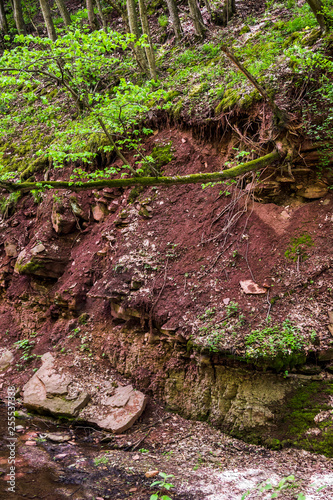 Foto Murales a steep bank of forest river