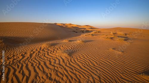 Dubai - Wüstenlandschaft - 255550181